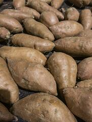 Sweet potatoes (binomial name Ipomoea batatas) on display at a farmer's market (selective focus).jpeg