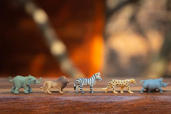 sorting toy animals introduces basic math concepts to children