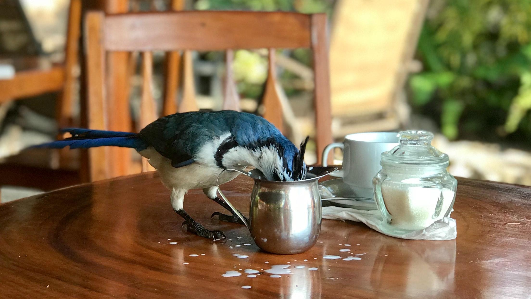 beverage-bird-breakfast-1058939