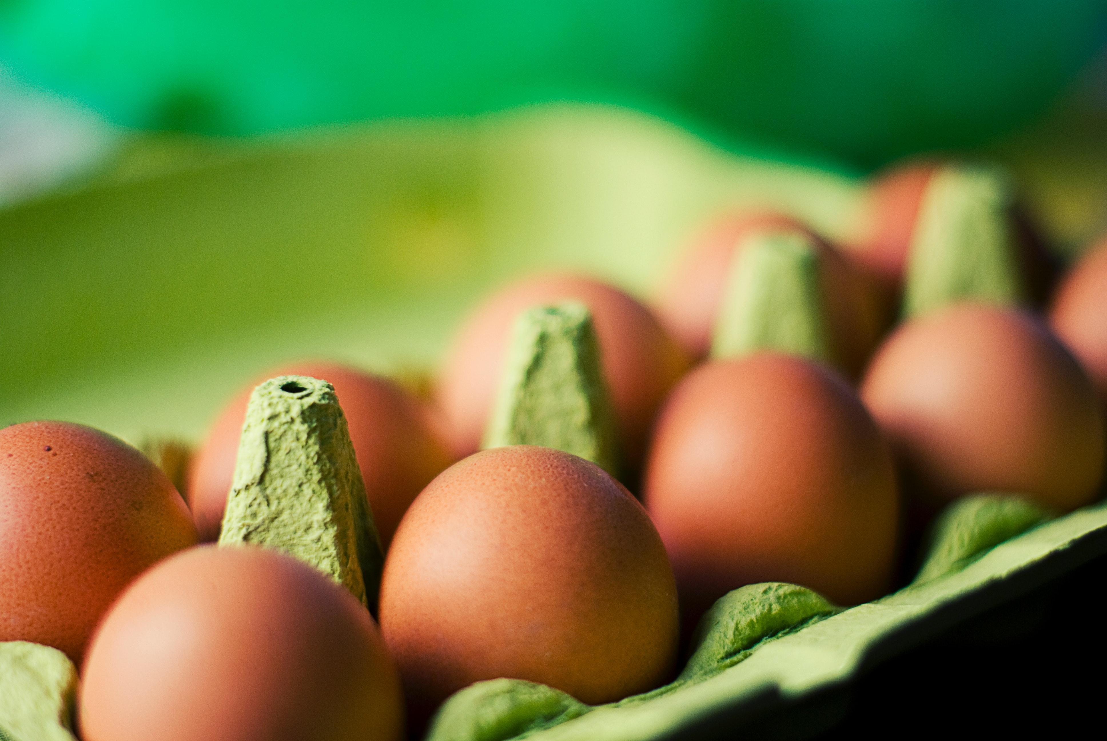 eggs-food-8483